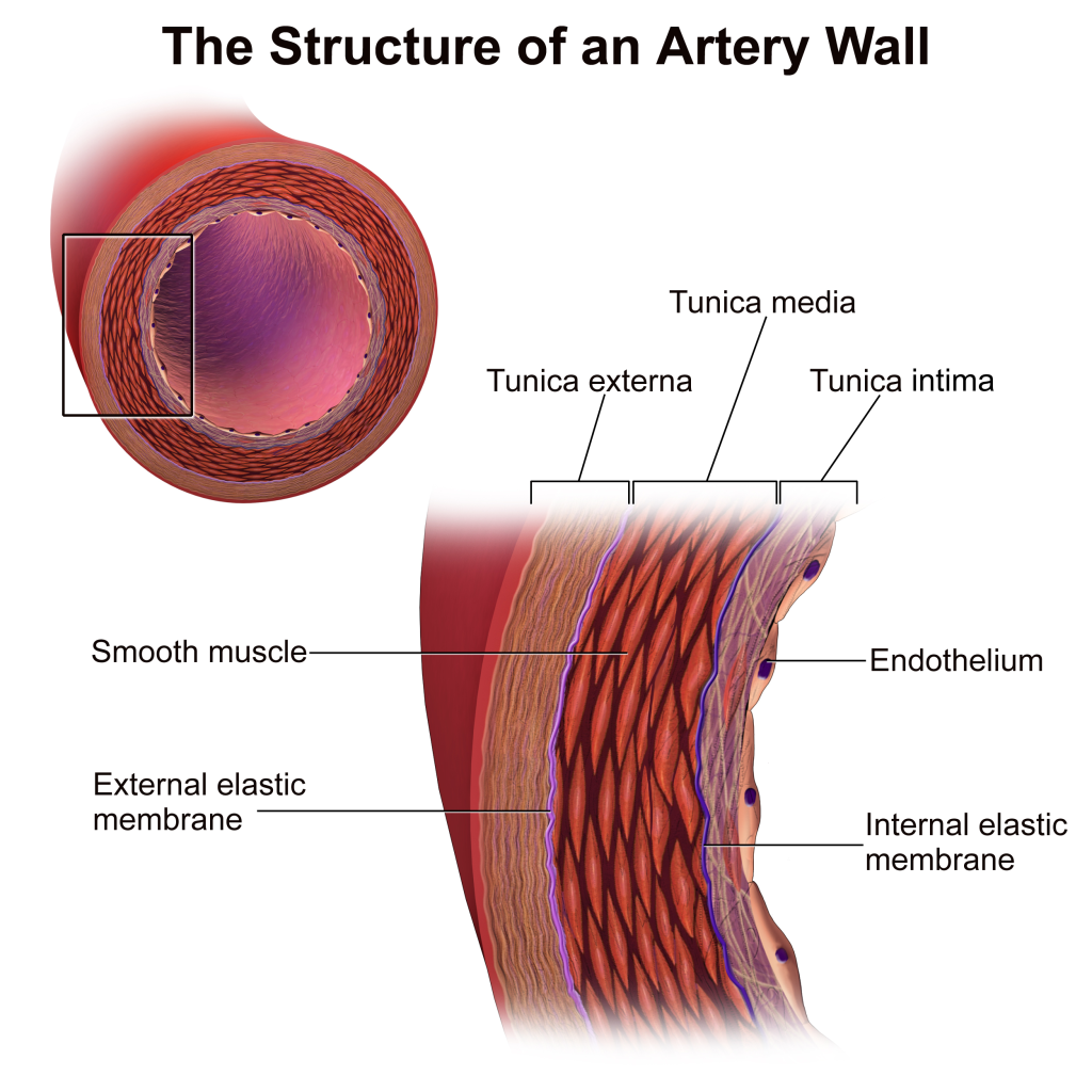 Arterial Tissue Layers