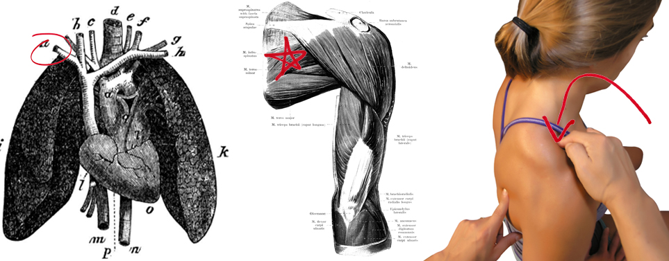 Fascial Counterstrain for the Subclavian Vein